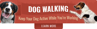 Dog Walking Arlington Heights and Palatine